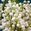 Convallaria - Stock Photo