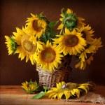 Sunflover — Stock Photo #8951704