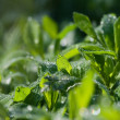Dew sumer — Stock Photo #9149951