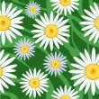 Royalty-Free Stock Vector Image: Seamless camomile background