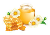Honey and honeycomb — Stock Vector