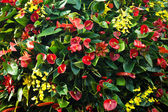 Exotic flowers — Stock Photo