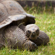 Big turtle - Stock Photo