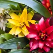 Tropical flowers — Stock Photo #9342618