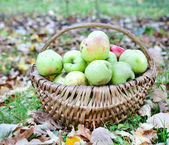 Apples in wicker basket — Stock Photo