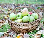 Manzanas en cesta de mimbre — Foto de Stock