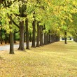 Autumn trees line in a park — Stock Photo