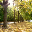 Alley of trees in autumn in the city park — Stock Photo #9624925