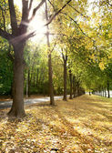 Alley of trees in autumn in the city park — Stock Photo