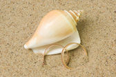 Seashell with wedding rings — Stock Photo