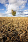 Drought, bad harvest — Stock Photo