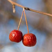 赤いカニりんご — ストック写真