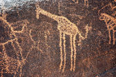 Ancient rock art in Niger depicting a giraffe — Stock Photo