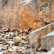 Foto Stock: Ancient rock art in Niger