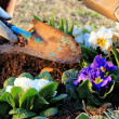 Garden work outdoor — Foto Stock #9461233