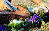 Garden work outdoor — Stock Photo