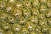 Coral Polyps — Stock Photo