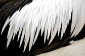 Feathers — Stockfoto