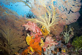 Coral Reef Landscape — Stock Photo