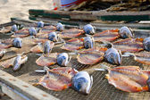 Drying fish — Foto Stock