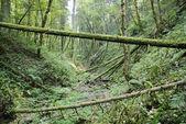 Floresta, schwarzwald — Foto Stock