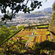 Botanic garden, Funchal — Stock Photo #9808595