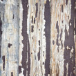 Wooden wall — Stock Photo #9181565