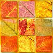 Autumn banners set background — Stock Photo
