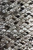 Salmon scales natural texture — Stock Photo