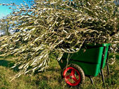 Wheelbarrow in the Garden of Olives — Stock Photo