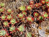Woter zachowaniu roślin — Zdjęcie stockowe