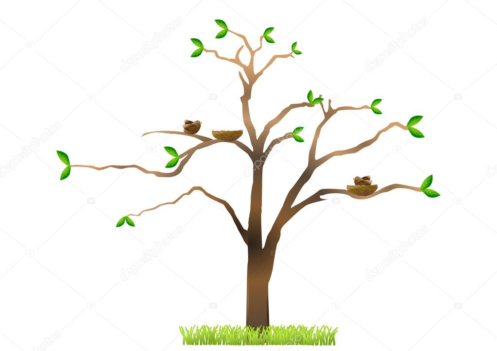 Tree with birds building nests in spring  Stock Photo #10375835