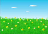 Spring flowers in field — Stock Photo