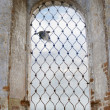 Raven in church window — Stock Photo