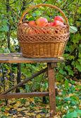 Apples in garden — Stock Photo