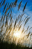 Grass in the field on sunset — Stock Photo