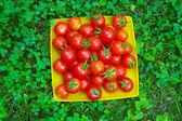 красные помидоры — Стоковое фото