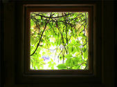 Kind on green leaves from window of dark room. — Stock Photo
