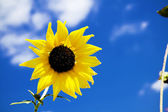 Sunny Flower — Stock Photo