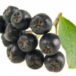 Stock Photo: Ashberry. Black ash berry isolated