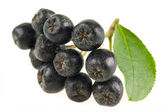 Ashberry. Black ash berry isolated — Stock Photo