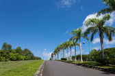 Road and palms — Stockfoto