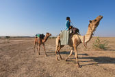 Camel rider — Stock Photo