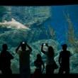 Aquarium visitors — Stock Photo