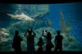Visitantes de aquário — Fotografia Stock