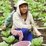 Young farming girls — Stock Photo #9275960