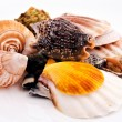Stock Photo: Clams mix