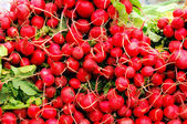 Raw Radishes — Stock Photo