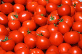 Group of tomatoes — Stock Photo