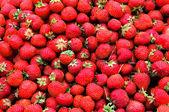 Small strawberries — Stock Photo